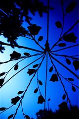 silhouette (paulh192) Tags: sky floral silhouette metal michigan bluesky grandrapids antiqueshop blueandblack wealthystreet anawesomeshot impressedbeauty diamondclassphotographer flickrdiamond