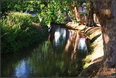 FRANCIA-07 (11461) (masaimanta) Tags: france ro river aude francia carcassonne nikond40x languedocroselln paisctaro