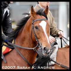 George Washington (Rock and Racehorses) Tags: ireland horse bay nj obrien georgewashington soe thoroughbred queenelizabethii breederscup gorgeousgeorge danehill coolmore twothousandguineas