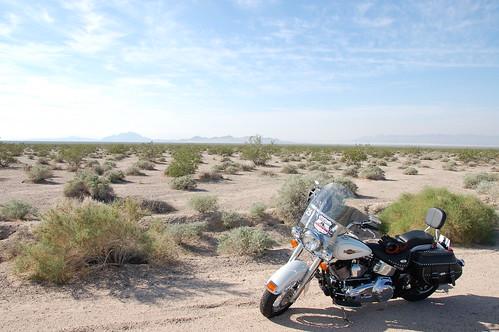 Blanquita en Mojave