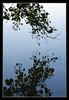 Autumn Reflections (matt :-)) Tags: lake reflection leaves foglie reflections lago leaf foglia mattia riflessi riflesso blueribbonwinner 80200mmf28d sartirana nikond80 excellentphotographerawards consonni mattiaconsonni