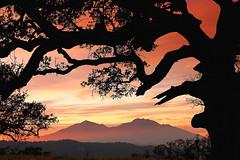 Mt Diablo (Marc Crumpler (Ilikethenight)) Tags: california trees sunset canon landscape twilight bravo trails si
