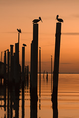 Count the Birds (blakelipthratt) Tags: sunset orange reflection silhouette marina canon ga river georgia dock ripple horizon pelican brunswick 100mm perch stsimonsisland naturesfinest flickrsbest abigfave platinumphoto superbmasterpiece goldenphotographeraward diamondclassphotographer megashot thatsclassy goldstaraward