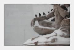 SnowBirds (Santi-Jose) Tags: park christmas x