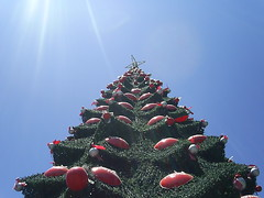 Quien me acompaa a escalar? :) (DeMenteBrillante) Tags: chile santiago arbol navidad 2007 cima plazadearmas