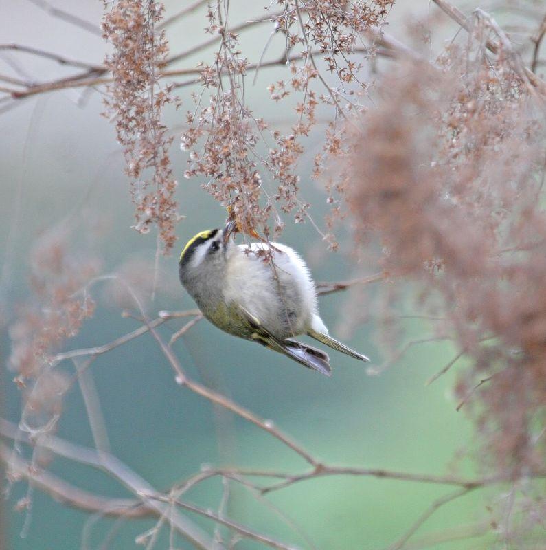 Razne ptice - Page 2 2155683191_f6d1169e51_o