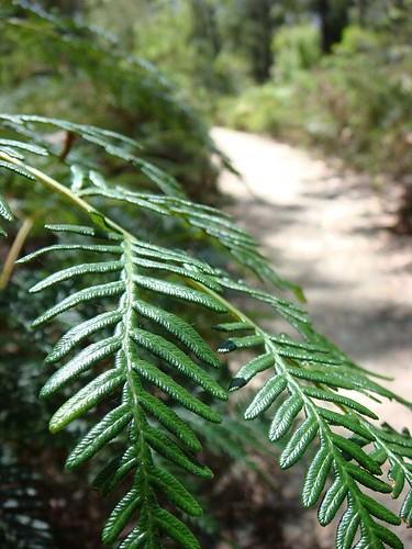 Tassie forest walk...