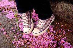 Autumn in summer ?? (Honey Pie!) Tags: autumn fairytale shoes curitiba converse allstar chucktaylor tnis asortafairytale contodefadas golddragon colourartaward cybershotdscs650