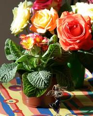 Glass Angel (shmarinuma) Tags: blue light red orange sunlight flower green glass rose yellow angel perfect photographer explore allrightsreserved the blueribbonwinner avision anawesomeshot impressedbeauty diamondclassphotographer flickrdiamond citrit brillianteyejewel flowersallkinds shmarinuma