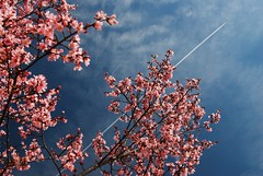 Shoot For The Sky (MilkaWay) Tags: pink tree plane georgia spring athens buds uga blooms contrails southcampus universityofgeorgia athensga clarkecounty
