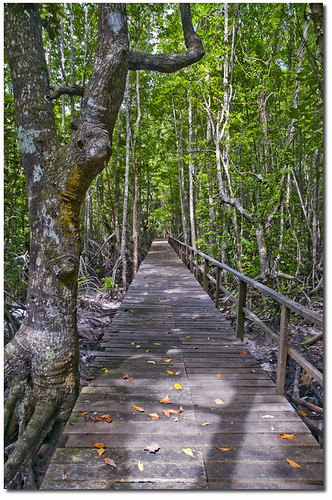 Gaya Mangrove Boardwalk