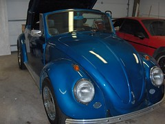 1969 Volkswagen Convertible (pugbugfamily) Tags: auto dog pet 1969 car animal vw sedan bug volkswagen frank fun comedy play jeep humor 1988 beetle pug convertible fiero pontiac luci 1972 volkwagen lu 1964 pugdog wrangler pugbug pugbugfamily