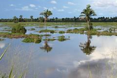 Alagamento no Stio Novo (vandevoern) Tags: brazil rio brasil brasilien paisagem fluss landschaft bambu maranho palmeira palmen alagamento berschwemmung igarap stionovo babau bacabal mearim vandevoern ipixunau