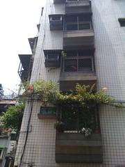 二樓的花長到三樓一家親了