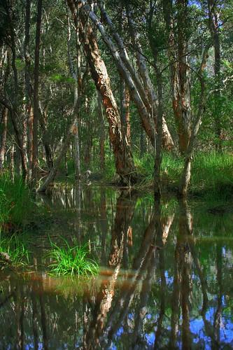 Tingalpa Creek