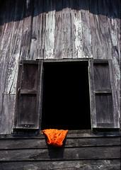 Saffron (vincenzooli) Tags: kodachrome laos bolavenplateau worldnomadsadventures lpwindows
