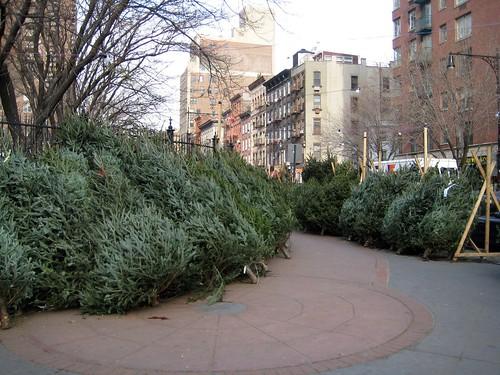 O Christmas Trees