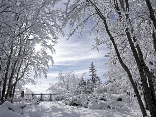 I <3 winter 2129111126_95cf30c904