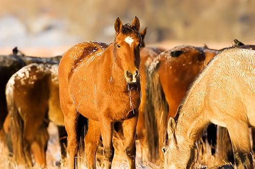 Feeding Horses 150