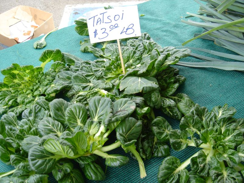 Tatsoi at Marin Farmer's Market