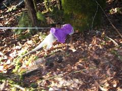 Pua's hike