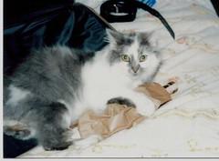 fluffy dec 1985