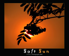 Soft Sun (Thushan S. Withana-Gamage) Tags: sunset sun leaves fruit dawn bravo magicdonkey aplusphoto frhwofavs