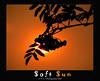 Soft Sun (Thushan S. Withana-Gamage) Tags: sunset sun leaves fruit dawn bravo magicdonkey aplusphoto frhwofavs