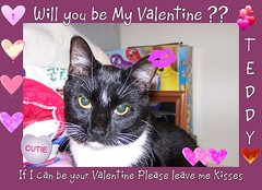 Can Teddy be your Valentine (Yvonne in Willowick Ohio) Tags: cats cute fuzzy adorable fluffy kisses valentines meow loveable cutefaces cuteeyes catkisses happpyvalentinesday