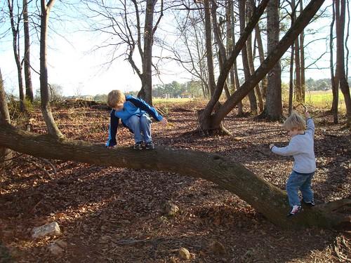 Climbing a Cool Tree