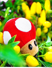 Toad in Yellow Pepper Kingdom (Omar Junior) Tags: world red macro folhas geotagged pepper chili dof pentax bokeh d nintendo kingdom super mario vermelho amarelo toad junior nes 8bit cogumelo omar bros ist yello pentaxistd snes reino smb pimenta pelucia 16bit fruto supernintendo 32bit supermarioworld nintendinho geo:lat=30049464 geo:lon=51229119