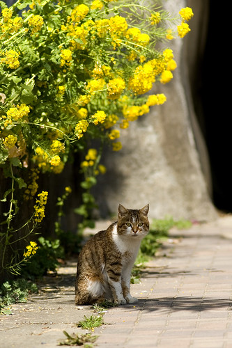 in the spring sun