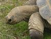 Tortoise  - Tulsa Zoo