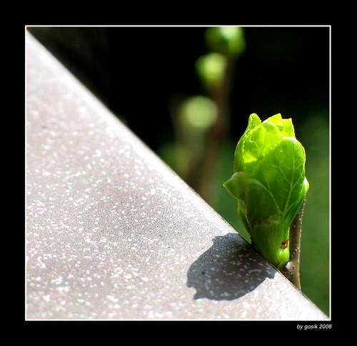 Diagonal spring