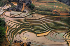 Rice fields North Vietnam (trickyd3) Tags: