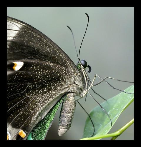 Butterfly_08