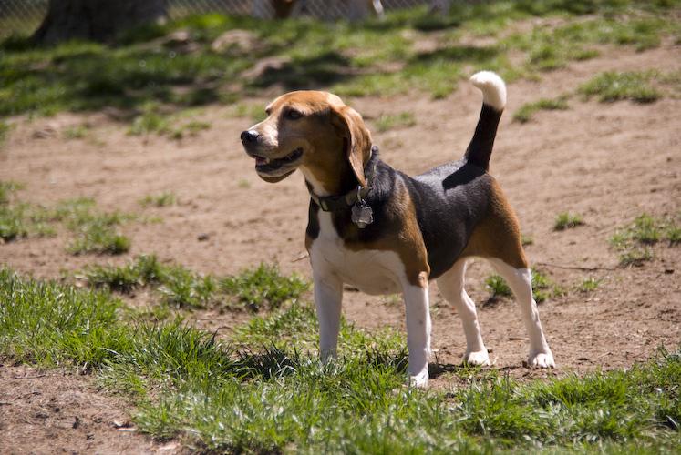 Bonnie's Favorite Place - The Dog Park!