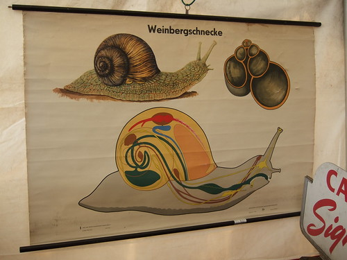 Snail Poster (by ann-dabney)