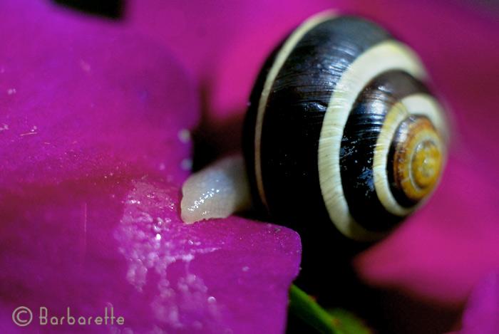 snail12