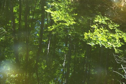 2008061043ため池に写る美人林