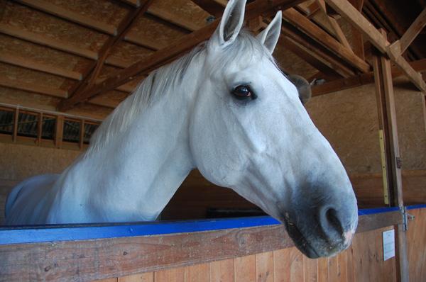 Sanjay's horse