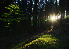 Last moment (Gregor  Samsa) Tags: light sun game forest nationalpark solitude view magic deep illumination beam silence overlook vcarsko bohemianswitzerland czechswitzerland czechczech eskvcarsko republiceskoesk republikaeskosask