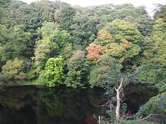 Autums Colours (Queenbie) Tags: autumn trees river aberdeen seatonpark riverdon