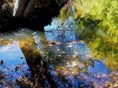 Circles (Kathleen Tyler Conklin) Tags: autumn reflection circles greatfalls maryland inspire supershot mywinners anawesomeshot thegoldenmermaid