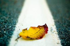 {{}} (slimninja) Tags: leaf dof nophotoshop 50mmf18af