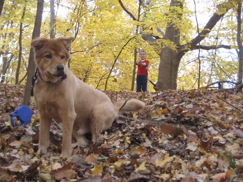 Dog and Gson