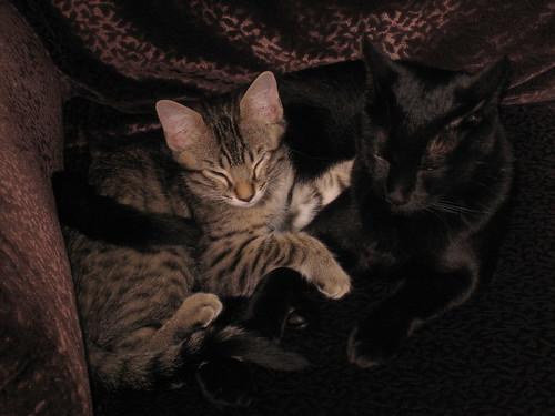 Rufus and Chauncey