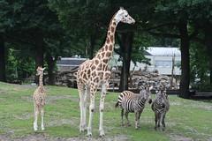 IMG_4869_emmen (Arie van Tilborg) Tags: zoo dieren emmen noorderdierenpark dierentuin mediacollege arievantilborg
