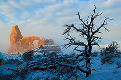 Turret Arch in Fog (LivingWilderness.com) Tags: park winter snow cold tree nature silhouette fog sunrise landscape utah sandstone arch foggy scenic dramatic arches national archesnationalpark turret turretarch