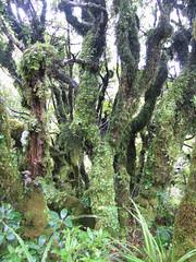 IMG_4052 (kenorrha) Tags: newzealand nznorthisland scenicsnotjustlandscapes